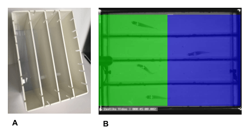 Conditioned Place Preference experimental setup with zebrafish